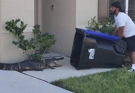 Florida Man Catches Alligator Viral Video In Trash Can
